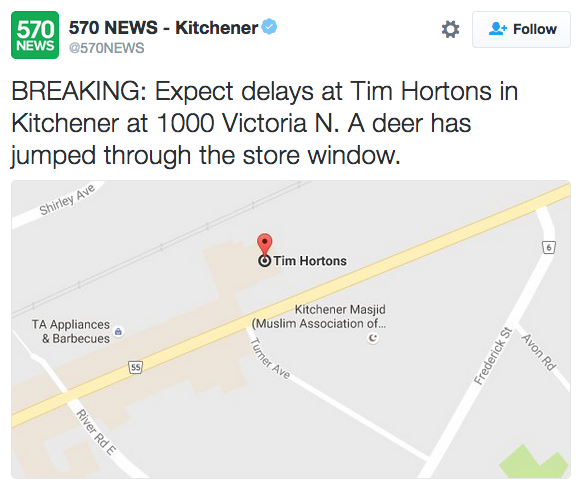 Tweet about deer jumping through store window